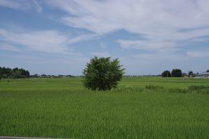 近くの田んぼの画像