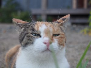 猫のチャコちゃん画像